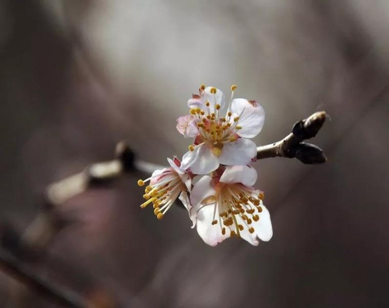 灵气之源·中式庭院主景树一览_11