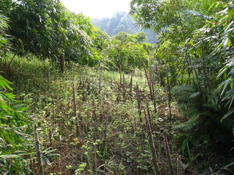 新修订的《造林技术规程》解读问答