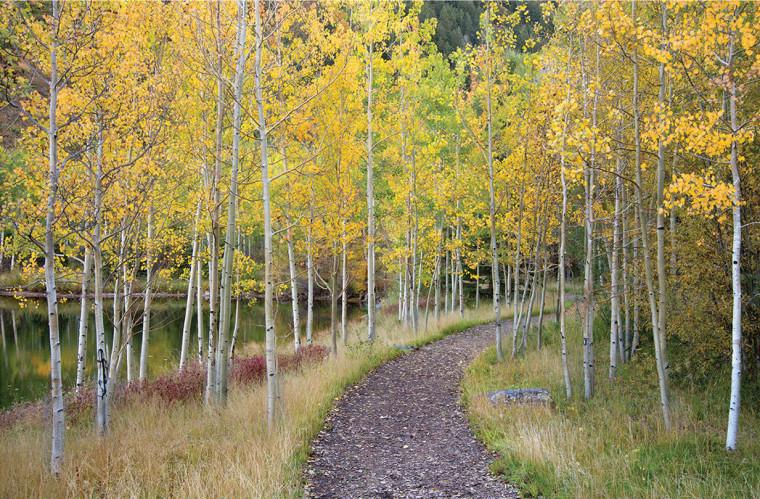 美国山地景观修复