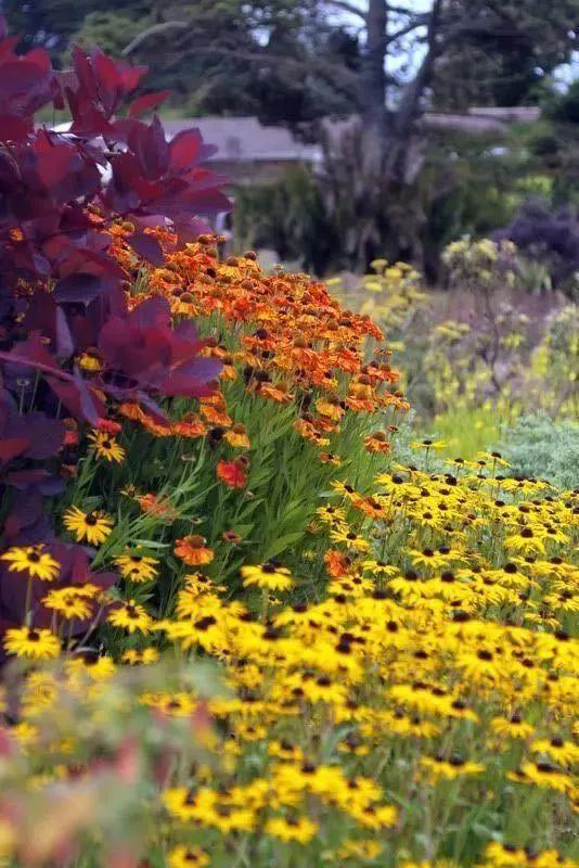花园植物配色魔法学,你get到了吗?_5