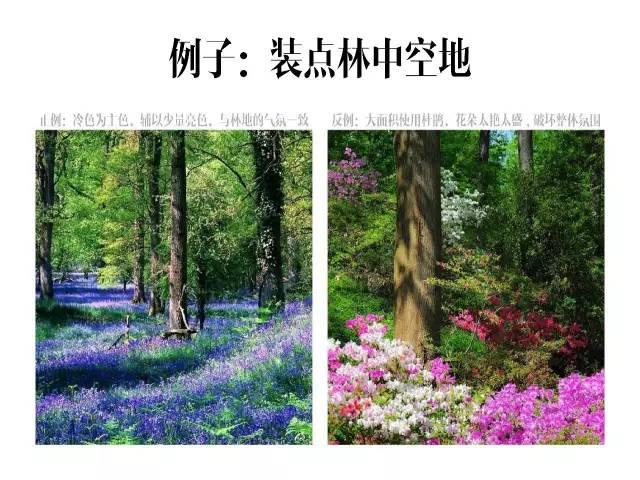 干货|庭院花园中的色彩搭配_11
