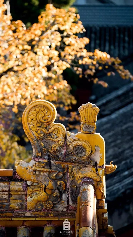 这才是中国人的院子,秋天美到骨子里_21