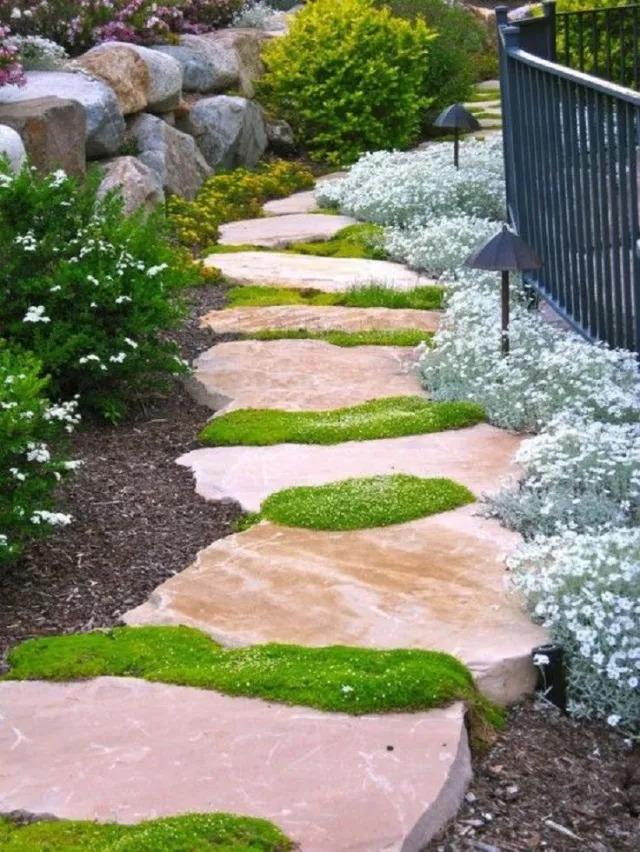不起眼的小野花,也可以给你的花园带来惊喜_6