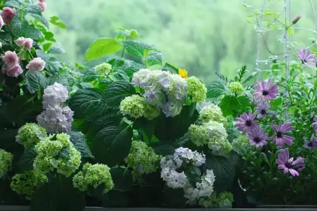 想要这样一个阳台,过小日子,看花开_16