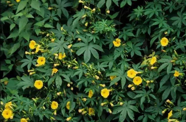 十八种藤本植物大集合~-044.jpg