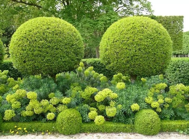 园林专业论文_园林植物_园林设计,景观设计,园林施工,园林植物