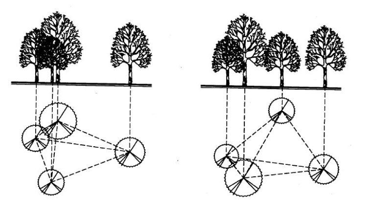 实用 景观植物设计方法(图文解析,值得收藏)_13