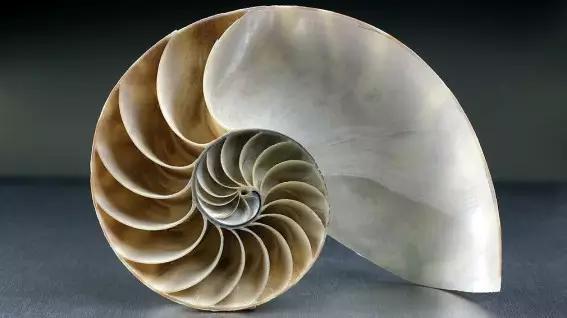被千变万化的鹦鹉螺建筑萌了一脸