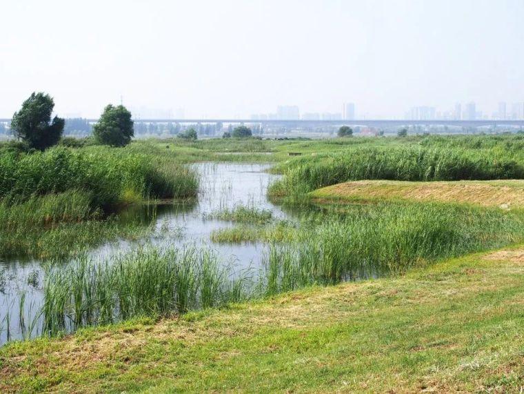 案例 渭柳湿地公园_7