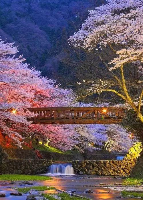 日本园林的艺术禅境|构筑起整个人生的,正是当下的美