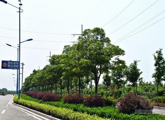 [武汉]市政道路及园林绿化监理大纲(2014年编)