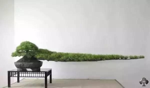 绿植这样摆,你家比园林还要美!_12