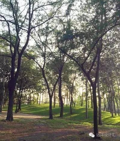 一个会种树的设计师,住宅每平方溢价3000元_14