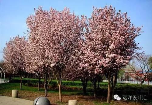 一个会种树的设计师,住宅每平方溢价3000元_22