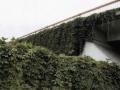 永乐东路桥梁中间隔离带处理方案