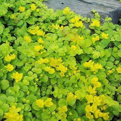 不起眼的小野花,也可以给你的花园带来惊喜_7