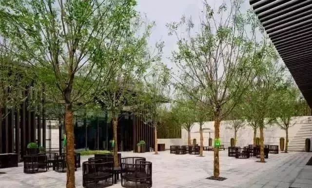 树阵景观的植物配置要点!_22