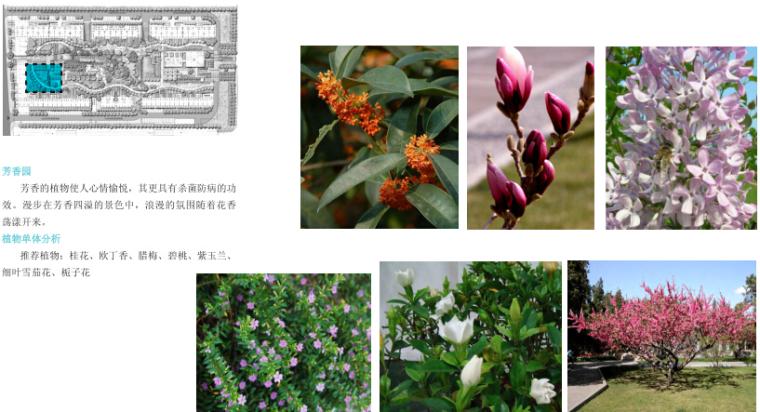 城市森林居住区景观深化设计——芳香园植栽设计