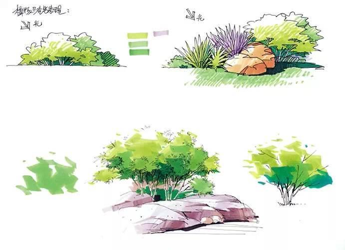 园林景观马克笔手绘_3