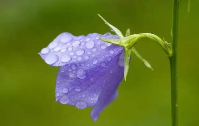 秋季要种的高颜值好养易活的植物界小公举!_6