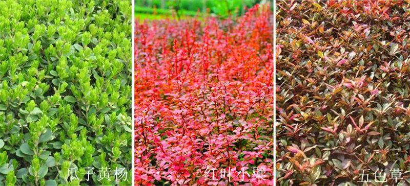 植物造景·实用景观设计来一波_37