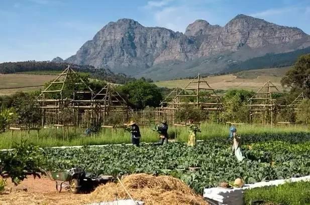 如何将一个农庄改造成乡村旅游圣地?_20