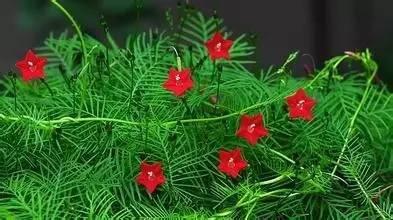 十八种藤本植物大集合~-026.jpg