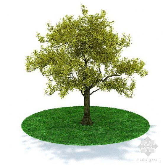 Vray案例作业02资料下载-植物02