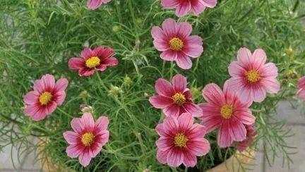 """这些花好养易开花!绿叶看腻了,不如来点""""颜色""""吧"""