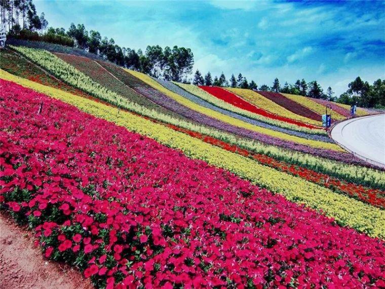 [景观植物]秋冬季节时令花卉,给你一片美丽花海