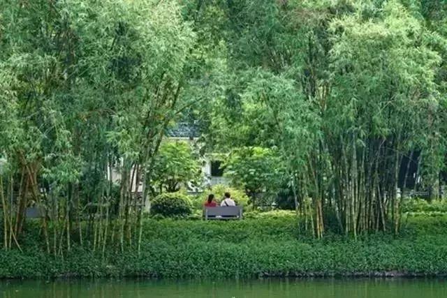 [康复花园]色声味香触,植物带给我们的五感体验