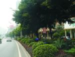 城市道路绿化设计讲义总结(92页)