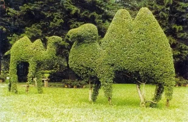 80个极美植物雕塑_44