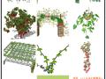 十个绿植,自己收集的,分享给大家