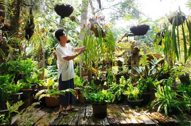 """一位建筑师,用妻子的花园建起""""植物王国"""""""