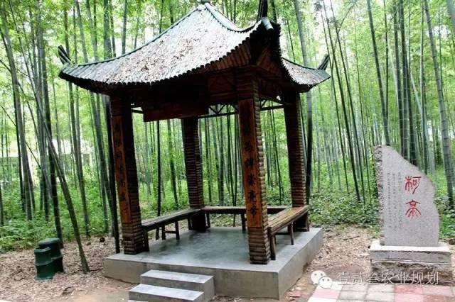 夏日竹韵——浅析竹子在景观设计中的应用_6