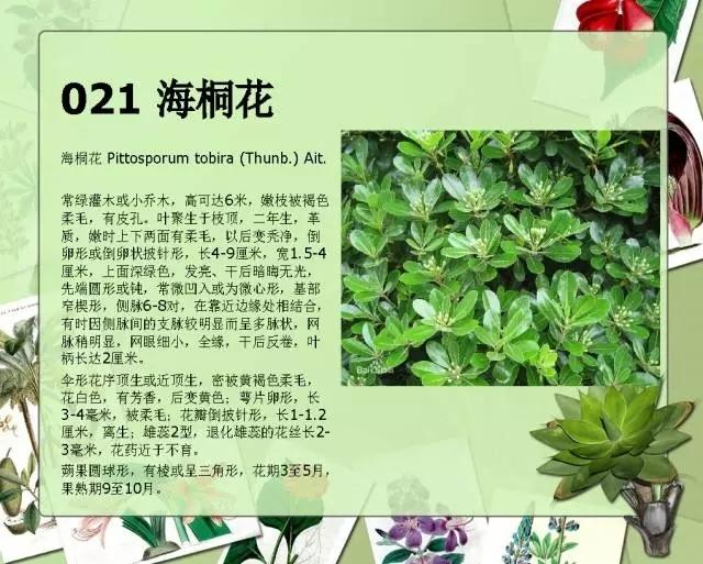 100种常见园林植物图鉴-20160523_183224_026.jpg