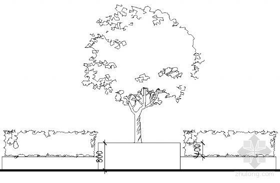 树池花池详图