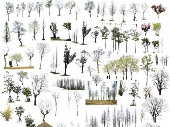 后期树木psd素材下载