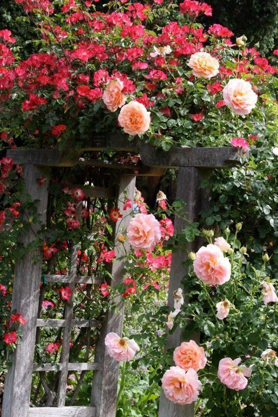 想要一个小院子,花开花落一辈子_9
