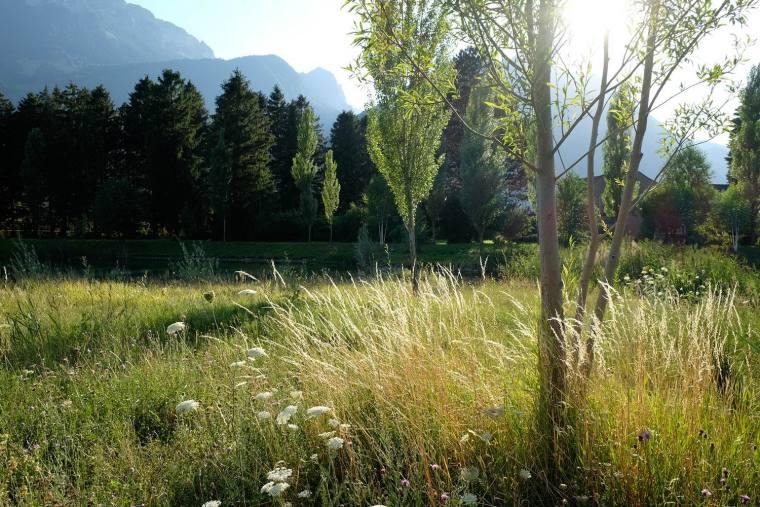 瑞士LowerFactoryPond水系环境修复-13