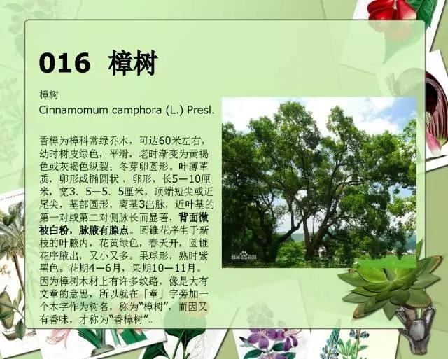 100种常见园林植物图鉴-20160523_183224_018.jpg