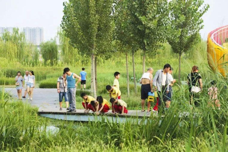案例 渭柳湿地公园_13
