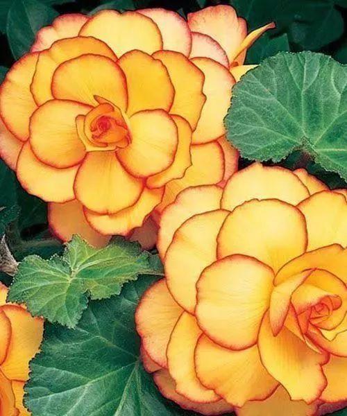 花园植物配色魔法学,你get到了吗?_18