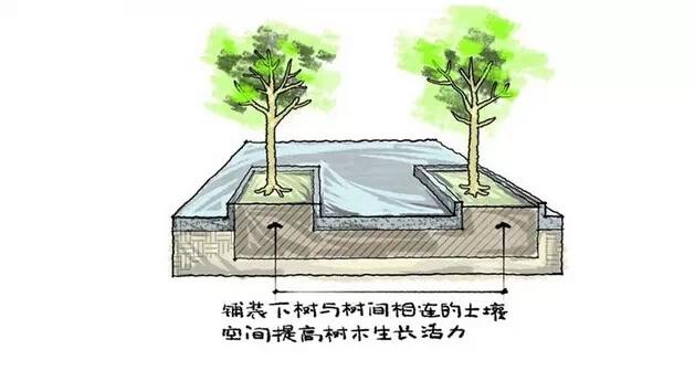 种植秘诀·图解园林景观之乔木种植技术-640.webp (8).jpg