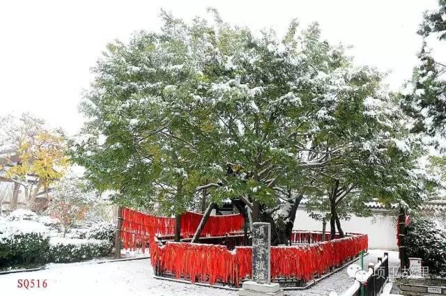 最美不过初雪,宿迁的项王故里就变成了西楚古城_11
