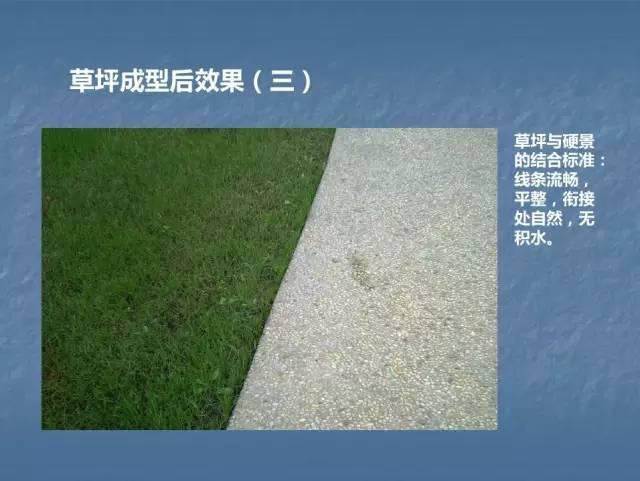 龙湖景观施工工艺标准效果(让你更懂现场)--软景篇_32
