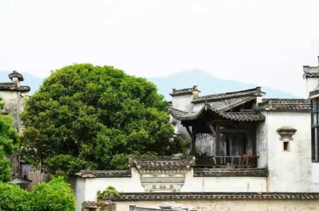 中国最美五十家民宿院子_142