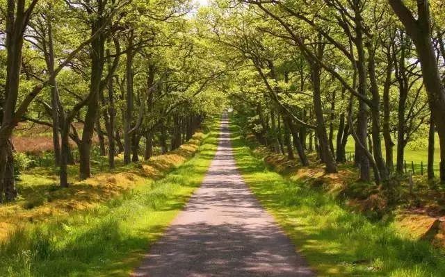 乡村景观|乡村景观是这么设计的_6