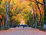 城市中心公园的典范:纽约中央公园